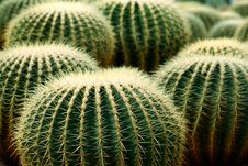 Free Cactus Stock Image - 7997651