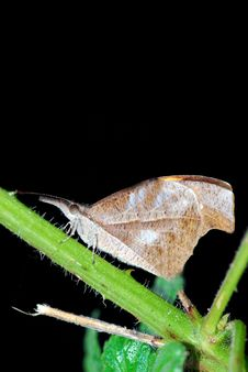Free Moth Stock Image - 7998271
