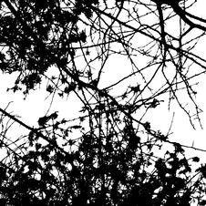Free A Tree Royalty Free Stock Photos - 7999778