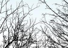 Free A Tree Royalty Free Stock Photo - 7999785