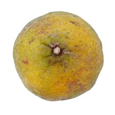 Free Ugli Fruit Also Called Uniq Fruit Royalty Free Stock Image - 80266