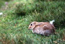 Free Rabbit Royalty Free Stock Photo - 81725