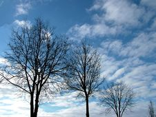 Free Downward Tree Stock Photography - 83422