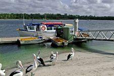 Free Dolphin Cruise Stock Image - 84421