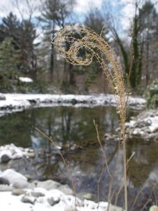 Free Curled Winter Grass Royalty Free Stock Photo - 84815
