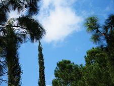 Free Trees And Skies Royalty Free Stock Photo - 85105