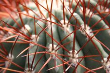 Free Cactus Royalty Free Stock Images - 85589