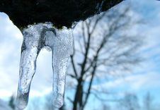 Free Icicle Royalty Free Stock Photos - 87528