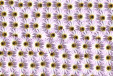 Free Flower Pattern Royalty Free Stock Photos - 88098