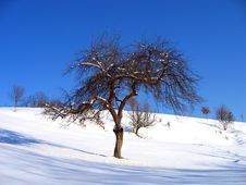Free Landscape Of A Lonely Tree Stock Images - 89634