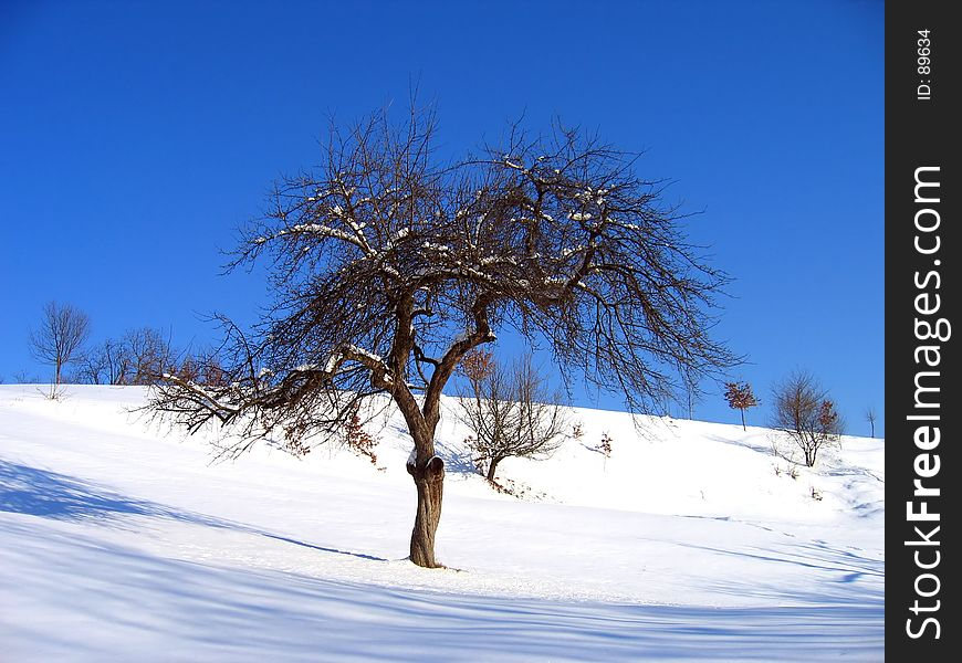 Landscape of a lonely tree