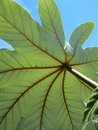 Free Leaf Detail Stock Photography - 804102