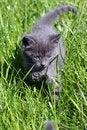 Free Kitty Royalty Free Stock Image - 807856