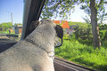 Free Dog In Car Window Royalty Free Stock Photography - 809707
