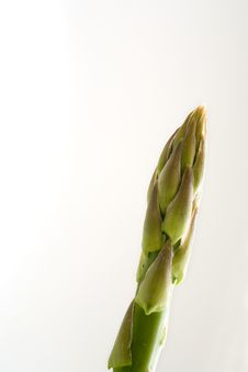 Free Single Asparagus Stock Images - 802754