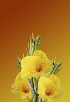 Free Yellow And Orange Horn Flowers Stock Image - 802891