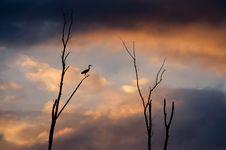 Free Heron Silhouette Stock Photos - 803683