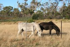 Free WHITE & BLACK HORSE IN A FIELD Stock Photography - 803922