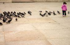 Free Chasing Pigeons Royalty Free Stock Image - 805546