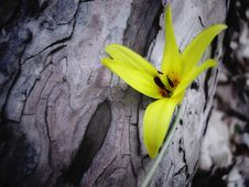 Free Lady Slipper Royalty Free Stock Images - 806999