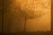 Free Tree Stock Photography - 807802