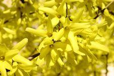 Free Yellow Royalty Free Stock Photos - 808148