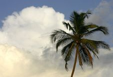 Free Tropical Palm Royalty Free Stock Photography - 809057