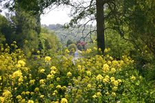 Free Yellow Fowers At The River Stock Photos - 809573