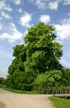Free Chestnut Stock Image - 809671