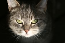 Free Cat Stock Photo - 809700