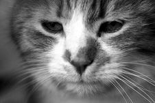 Free Cat Stock Images - 809974