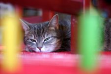 Free Cat Stock Photography - 809982