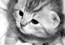 Free Cat Stock Photos - 809993