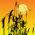 Free Plant Silhouette Stock Photo - 8000210