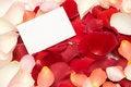 Free Rose Petals Stock Photo - 8000410