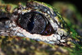 Free Eye Of The Crocodile Stock Image - 8009261