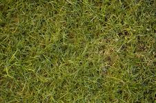 Free Grass Texture Stock Images - 8000364