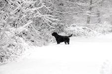 Free Winter Scene Royalty Free Stock Photos - 8001518