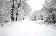 Free Winter Scene Stock Photography - 8001842