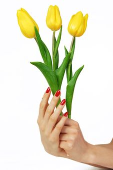 Red Manicure And Yellow Tulips Stock Image