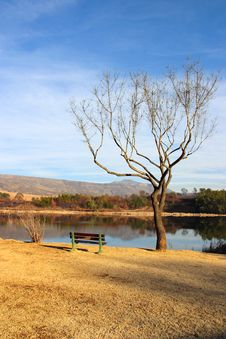 Free Tree Overlooking Dam Royalty Free Stock Photography - 8004657