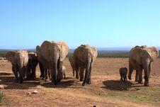 Free Elephant Herd Royalty Free Stock Image - 8005986