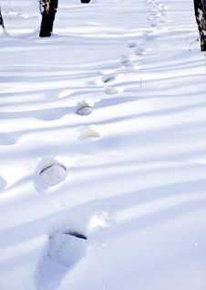 Free Traces On A Snow Royalty Free Stock Image - 8007056