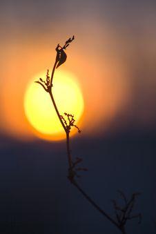 Free Sunset Royalty Free Stock Image - 8009046