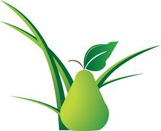 Free Fresh Green Pear Fruit Stock Photography - 8009122
