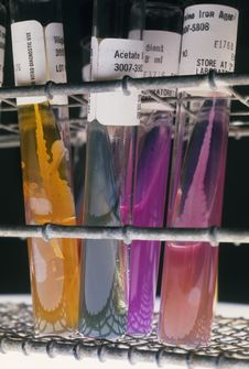 Free Real Lab Test Tubes Royalty Free Stock Photo - 8009225