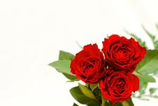 Free Beautiful Roses On A White Shiny Background. Stock Photos - 8009613