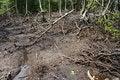 Free Wetland Mangroves Stock Image - 8019971