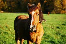 Free Grazing Horse Royalty Free Stock Photo - 8011545