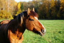 Free Grazing Horse Stock Photo - 8011550
